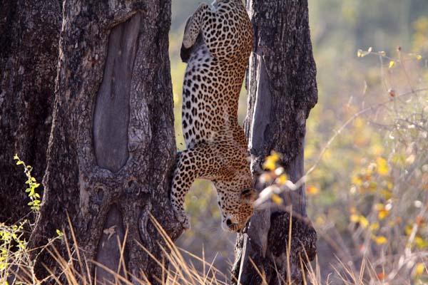 Safari Pictures