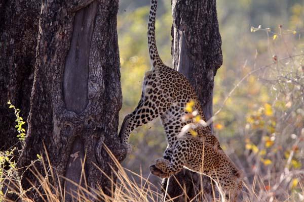 African Wildlife Pictures