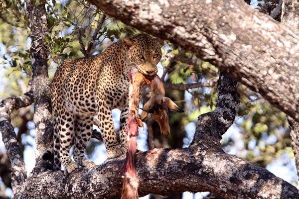 African Wildlife Images