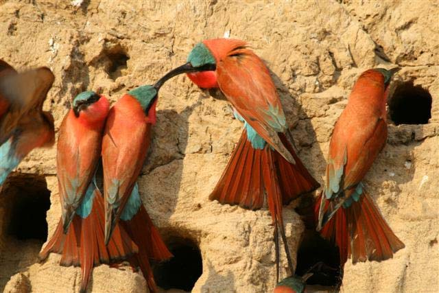 birdwatching africa