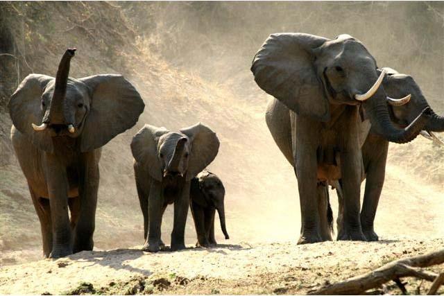 wildlife african safari