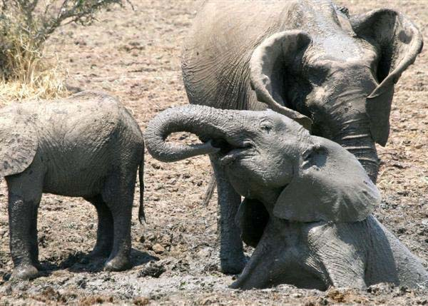wildlife safari Zambia