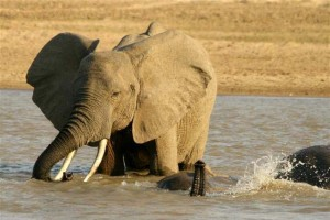 zambia bush adventure
