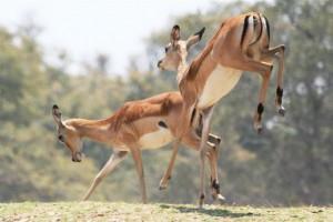 photographic safari africa