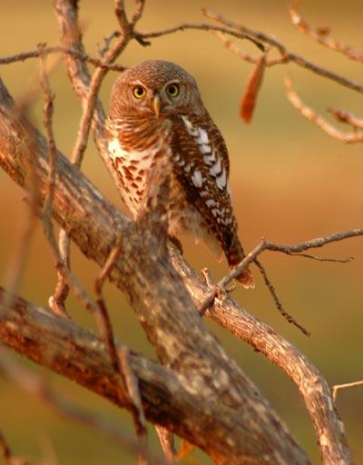 birdlife africa