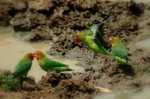 birdlife photography africa