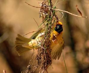 bird africa