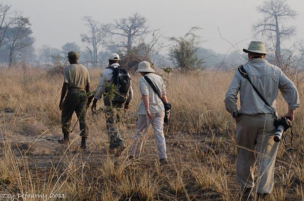 Zambia wilderness