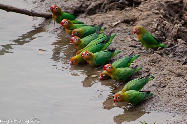 birding zambia