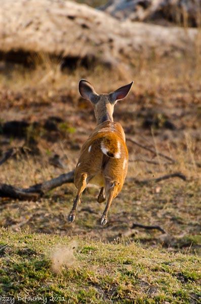 wildlife zambia