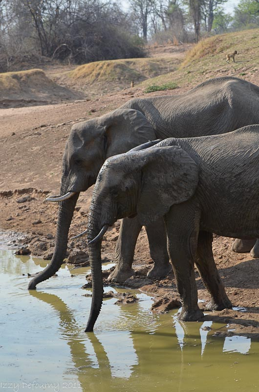 elephant photographic safaris
