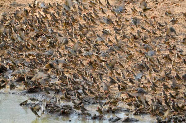 birdlife photographic safaris