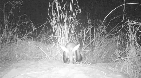 Aardvark still 7