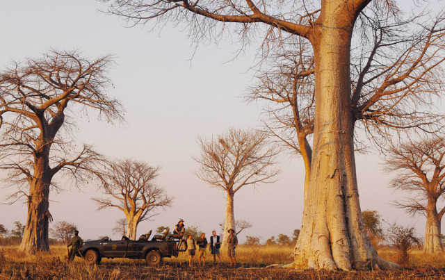Drive Baobab Forest (3)-2