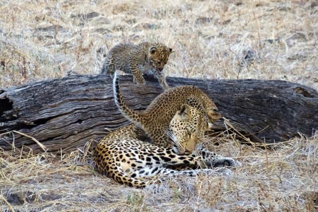 Jacques Appeldoorn Leopard Cubs (1)