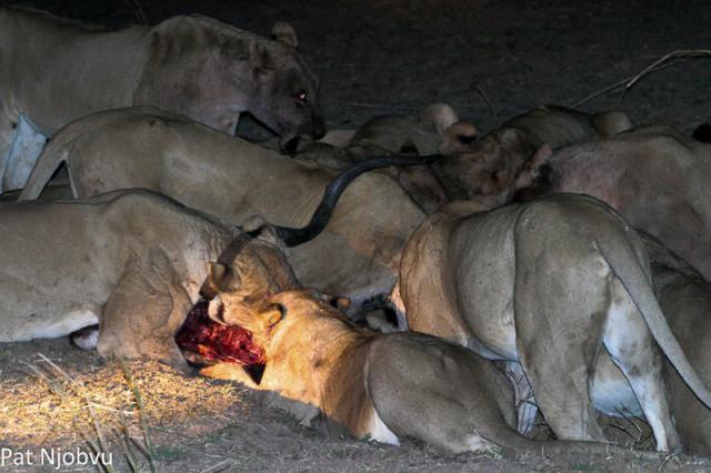 P Njobvu Kaingo kudu kill (3)