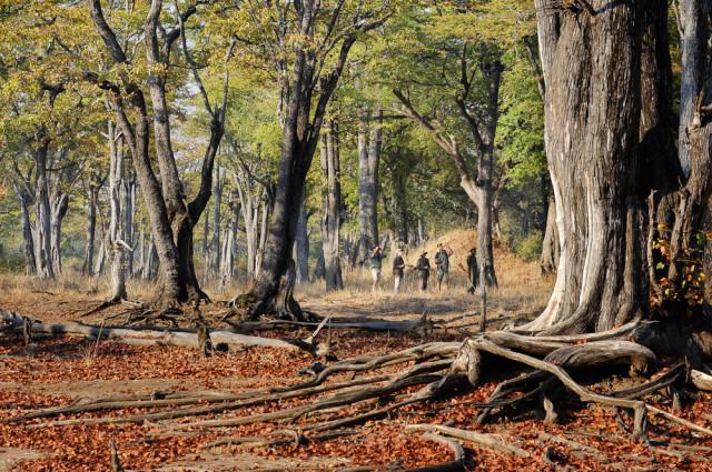 Walk Mopane (1)-2