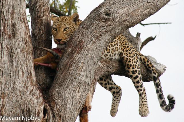 Meyam Leopard Malaika (9)