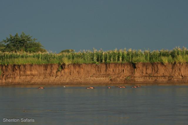 Village maize fields on the Luangwa