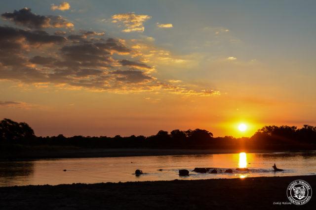 Iconic Sundowner Luangwa River