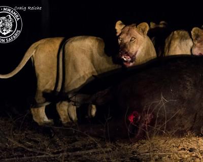 kapandas and mwamba-kaingos come together feed
