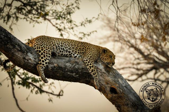 Your Romantic Dream Safari