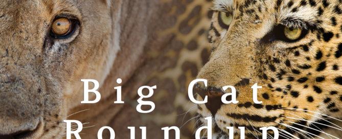 Big Cat Roundup