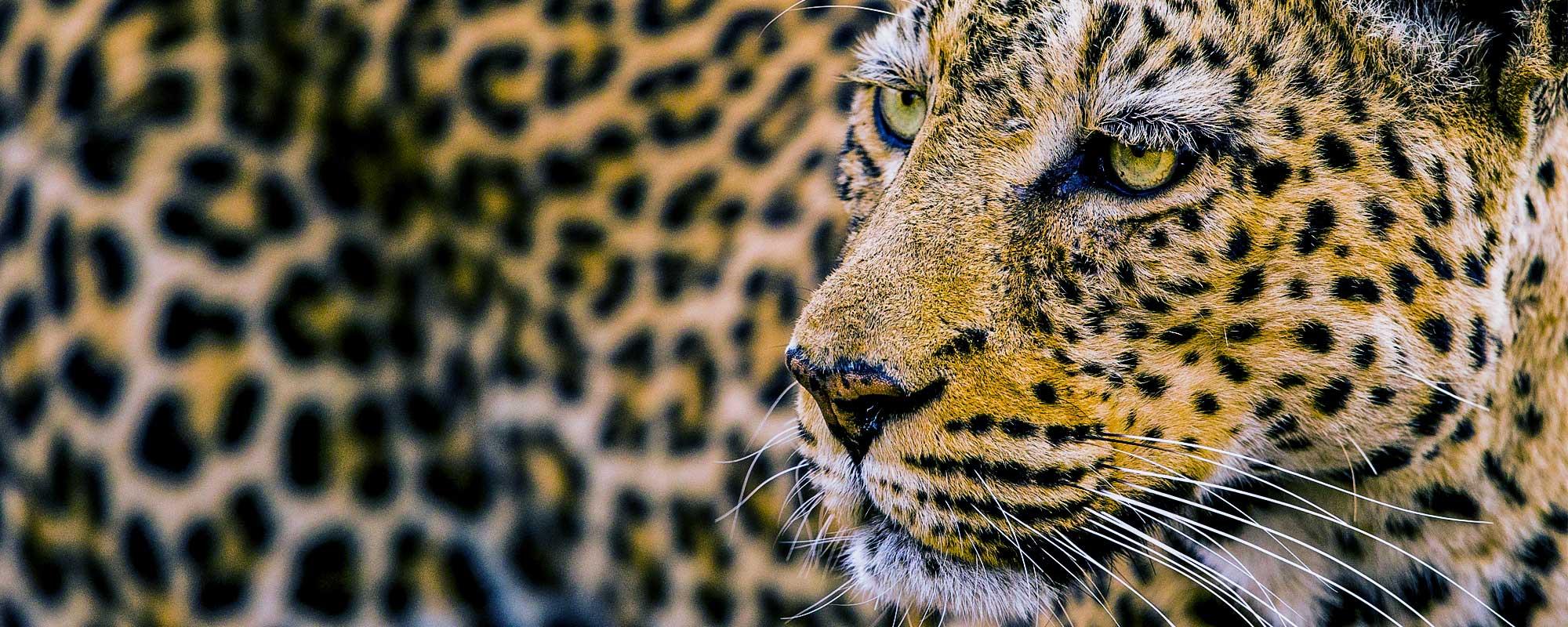 Shenton Safaris | South Luangwa National Park - Zambia